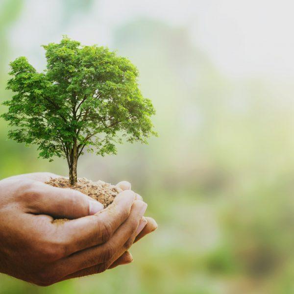 Company Tree Proleven